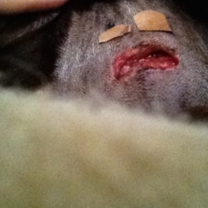 dog, natural remedies, wound healing, health, DIY
