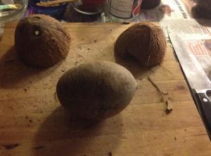 homesteading, coconut, opening coconut, choosing coconut, DIY, healthy living
