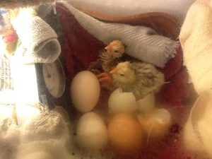 Lessons on life and death, patience, incubating, permaculture